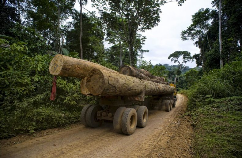 Timber operation