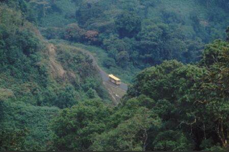 Nyungwe cloud forest