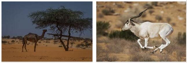 Mauritania Animals