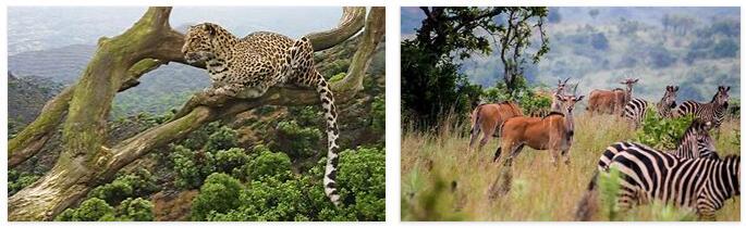 Rwanda Animals