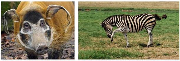 Sudan Animals