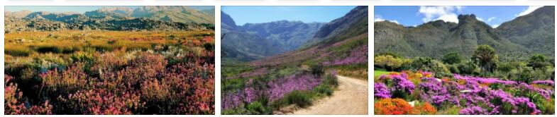 Cape Floral Protected Region