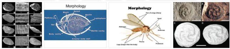 South Africa Morphology